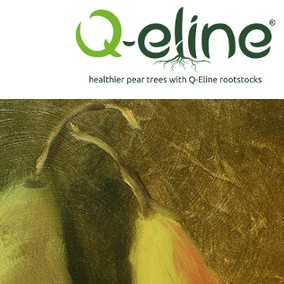 Website Q-Eline
